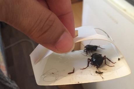 Rodents, bedbugs, mould: UK asylum housing is a Hostile Environment